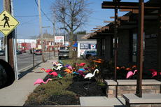 """<div class=""""source""""></div><div class=""""image-desc"""">Colorful flamingoes can be sent to friends, family or businesses to help pay to send youth from Williamstown Baptist Church on a Haiti mission trip this summer.</div><div class=""""buy-pic""""><a href=""""/photo_select/17453"""">Buy this photo</a></div>"""