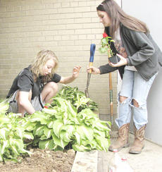 "<div class=""source"">Bryan Marshall</div><div class=""image-desc"">Morgan Roberts and Michaela Goderwis work as a team to set out plants attractive to butterflies as part of the Outdoor Environmental Classroom at Grant County Middle School.</div><div class=""buy-pic""><a href=""http://web2.lcni5.com/cgi-bin/c2newbuyphoto.cgi?pub=195&orig=IMG_3960.jpg"" target=""_new"">Buy this photo</a></div>"