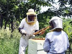 "<div class=""source""></div><div class=""image-desc"">Beekeeper Eldridge ""Junior"" Cook of Corinth, demonstrates a late-Spring hive check for novice Nancy Ogg.</div><div class=""buy-pic""></div>"