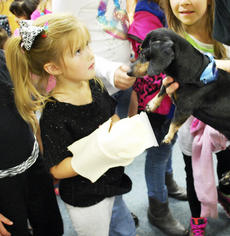 """<div class=""""source""""> Camille McClanahan </div><div class=""""image-desc"""">Dry Ridge Elementary student Massie Woodyard looks a little unsure as she checks out Woody. </div><div class=""""buy-pic""""><a href=""""/photo_select/15965"""">Buy this photo</a></div>"""
