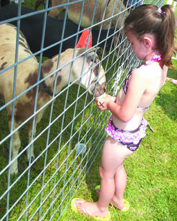 Lena Lamour feeds a goat at the petting zoo.