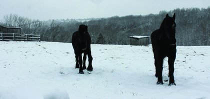 Horses trudge around in the snow on a farm on KY-36 near Jonesville. Photo by Amanda Kelly