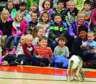 Above, hundreds of students learned about where the animals came from, what they eat and how they live. They also had a few laughs watching a joey kangaroo wearing a diaper jump around the gym.