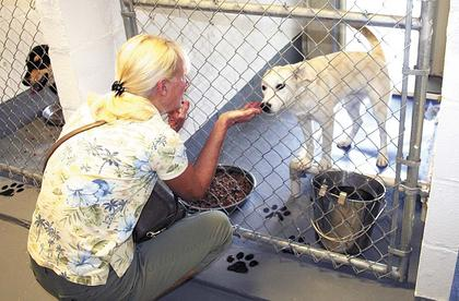 Bonnie Keach of Crittenden visited the Grant County Animal Shelter during last week's open house/adoption event to check out the animal's available for adoption