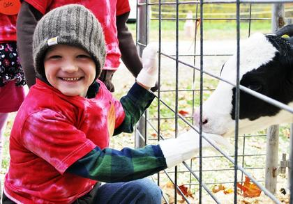 SES student Caleb Richardson thinks it's funny the baby calf is nibbling on his fingers.