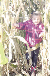 CMZ kindergartner Haylee Rigney peeks through the corn maze at Country Pumpkins.