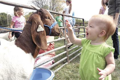 Gracee Bowen of Dry Ridge got pretty excited when she met her first goat at the 4-H petting zoo held in conjunction with 