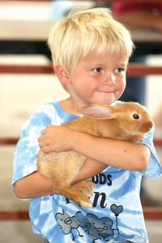 """<div class=""""source""""></div><div class=""""image-desc"""">Justin Eversole holds on tight to his rabbit during the Clover Buds show.</div><div class=""""buy-pic""""><a href=""""/photo_select/18559"""">Buy this photo</a></div>"""