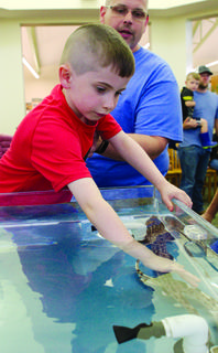 Gavin Brelitch leans over the tank to pet a shark during a Grant County Public Library event. Newport Aquarium brought several species during the June 11 event.