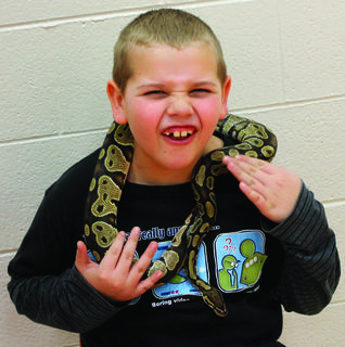 Colten Julien got upclose and personal with a ball python snake Jan. 11 at Williamstown Elementary School. Zoodles, a company from Whitehouse, Tennessee, brought several animals to teach children about and let the students interact with, including a skink, parrot, lizard, snake, tortoise and joey kangaroo. Photos by Amanda Kelly