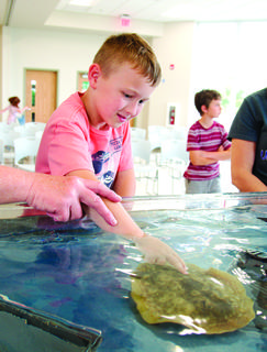 Jeffrey Clemons, left, and Sabrina Banschbach pet live stingrays at the Sting Ray Cart on June 17. Participants had the opportunity to be up close with live stingrays and learn about their habitat.