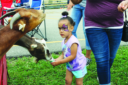 Pairess Philpot feeds some hungry goats corn at the petting zoo in the kid zone.