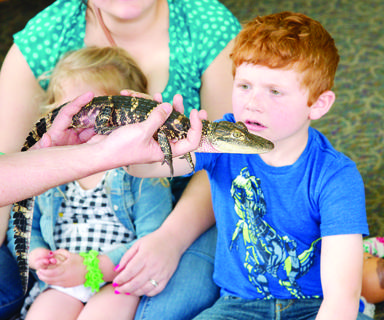 Caid Yates gets an upclose look at an American alligator.